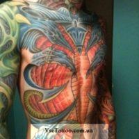 Биомеханика на грудь и живот