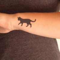 Кот на руке минимал