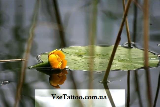 фото цветка кувшинки