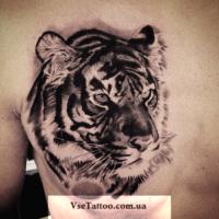 тигр черно белая татуировка