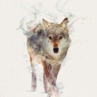 Эскиз волка для татуировки в силе акварель