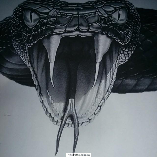 Эскизы тату змей: описание, фото, картинки