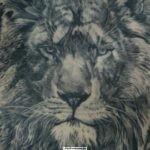 татуировка льва у мужчины черно-белая